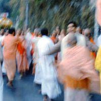 Swamis-go-wild_5x5